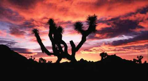 Joshua_Tree_Sunrise_-_thumb