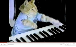 cat plays piano