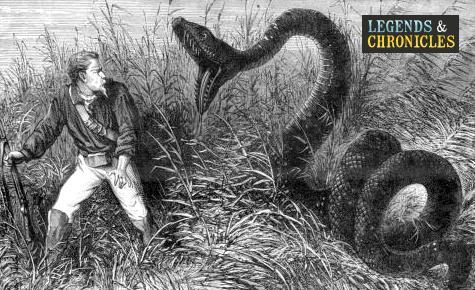 giant-anaconda-1